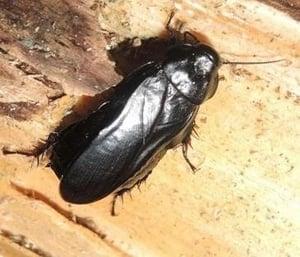 case-legno-insetti