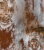 processo-di-marcescenza-case-di-legno-1